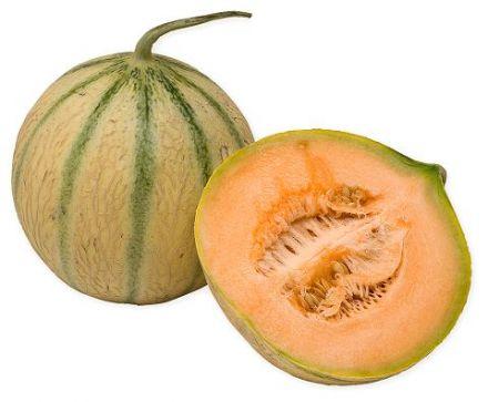 Melon charentais tout sur les melons sur gourmetpedia - Culture du melon charentais ...