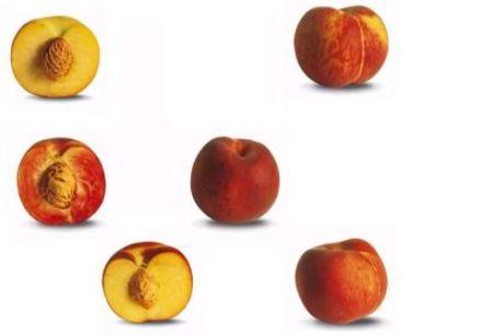 P che nectarine et brugnon comment les reconna tre sur gourmetpedia la r f rence des gourmets - Peche a peau lisse ...