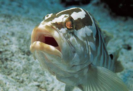 M rou tout sur les poissons cuisine et recettes sur - Cuisiner poisson congele ...